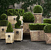 Live Boxwood Topiaries