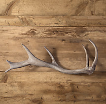 Deer Antler in Cast Resin