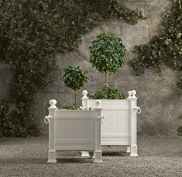 Live Single-Ball Ivy Topiary