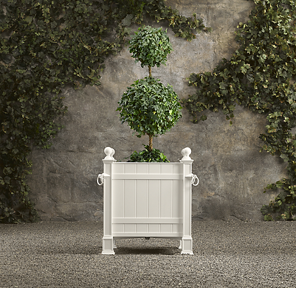 Live Double-Ball Ivy Topiary