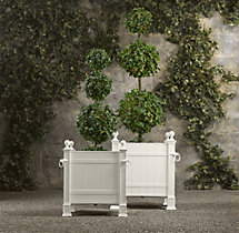 Live Triple-Ball Ivy Topiary