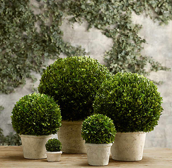 Preserved Boxwood Globes
