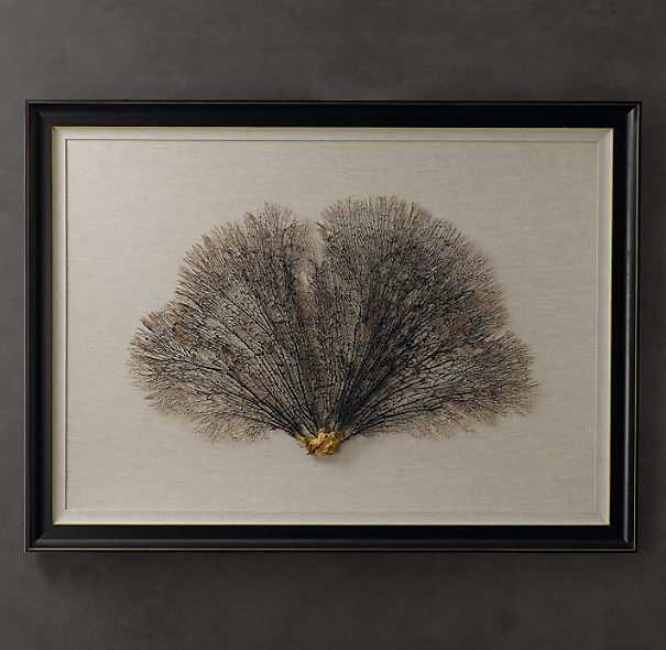 Preserved Sea Fan With Ivory Mat