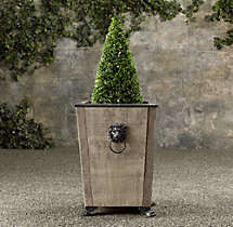 Live Boxwood Cone Collection