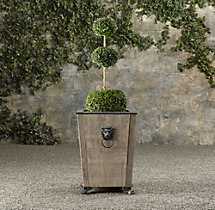 Triple Ball Live Boxwood Topiary