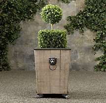 Ball over Cube Live Boxwood Topiary