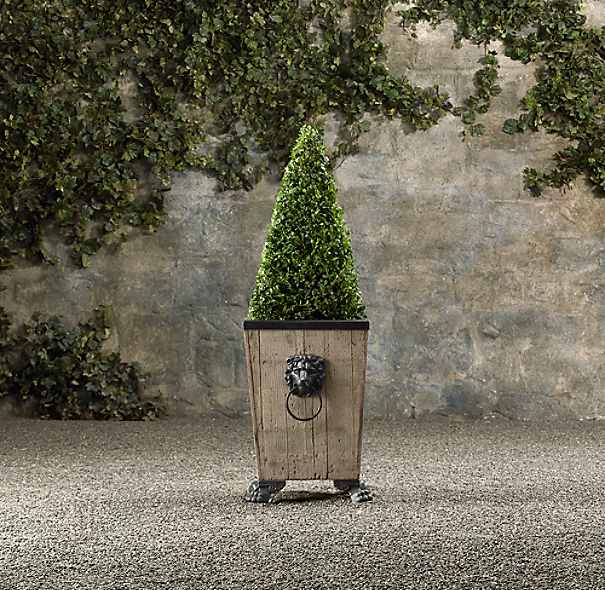 Dwarf Live Boxwood Topiary