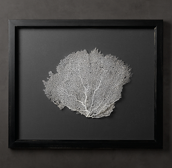 Preserved Sea Fan with Grey Mat