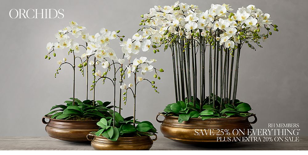 Shop Orchid Greenery Décor