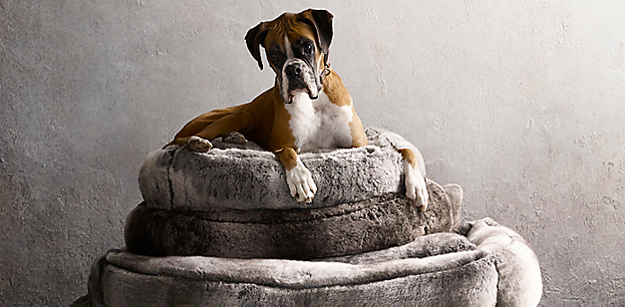 modern dog restoration intended for hardware louis outstanding pet attractive beds ecohaushub bed com