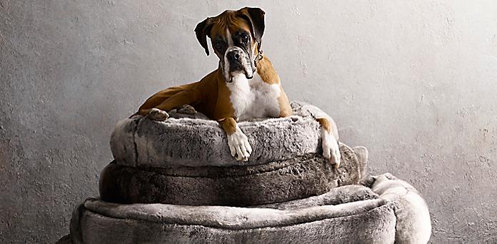 hardware quatrefoil search in mudroom ideas dog restoration beds m bed with built design