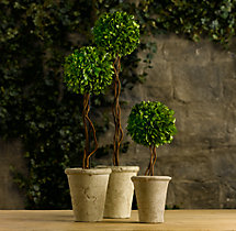 Preserved Boxwood Tree Topiaries