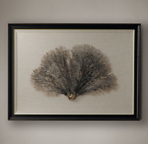 Preserved Sea Fan With Ivory Mat - Rectangular