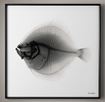Nick Veasey X-ray Photography: Plaice