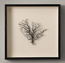 "Preserved Sea Fan with Ivory Mat 22""X22"""