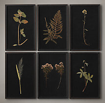 Hand-Pressed Botanicals on Linen Black
