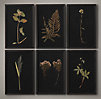 Hand Pressed Botanicals On Linen Black