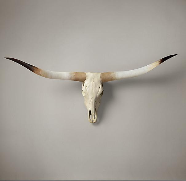 Texas Longhorn Steer Skull Natural