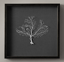 "Preserved Sea Fan with Grey Mat 22""X22"""