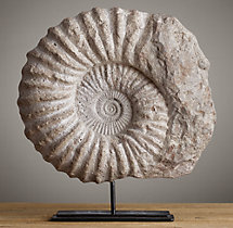Cast Ammonite Fossil - Large