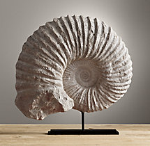 Cast Ammonite Fossil - Extra-Large
