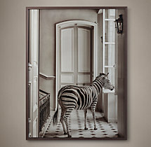 William Curtis Rolf: Deyrolle Zebra