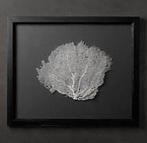 Preserved Sea Fan with Grey Mat - Rectangular